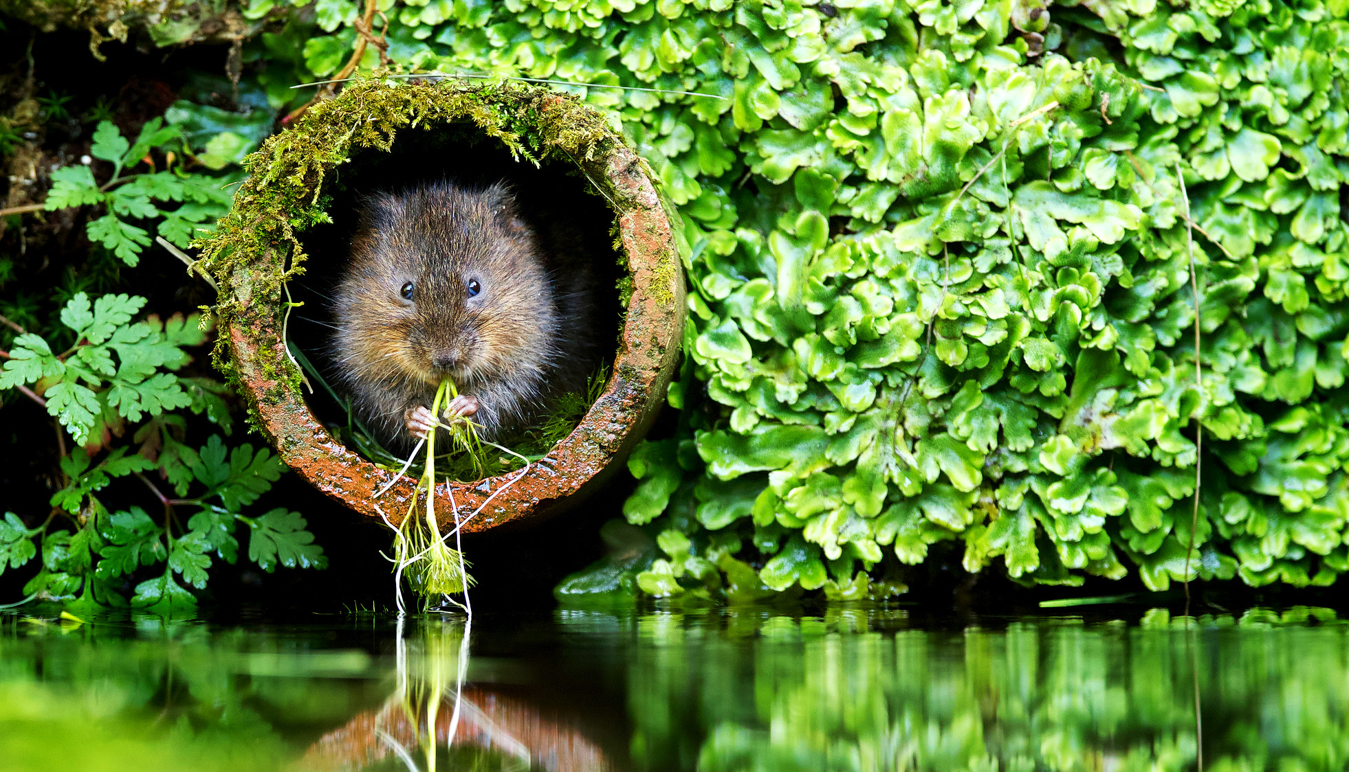 Photograph Vole in a Hole by Mark Bridger on 500px