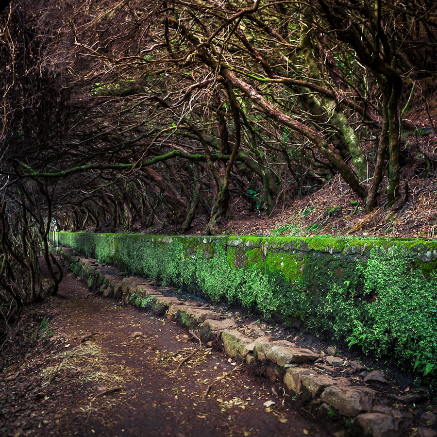 Photograph Madeira, Levada 25 fonets by Magnus Larsson on 500px