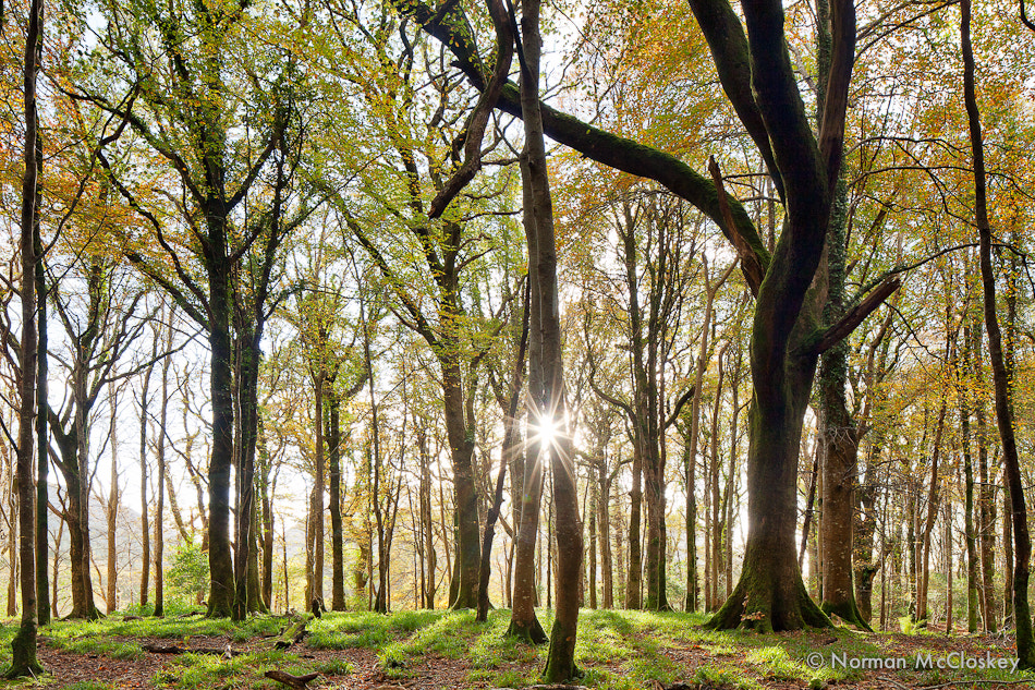Photograph Forest light by norman mccloskey on 500px