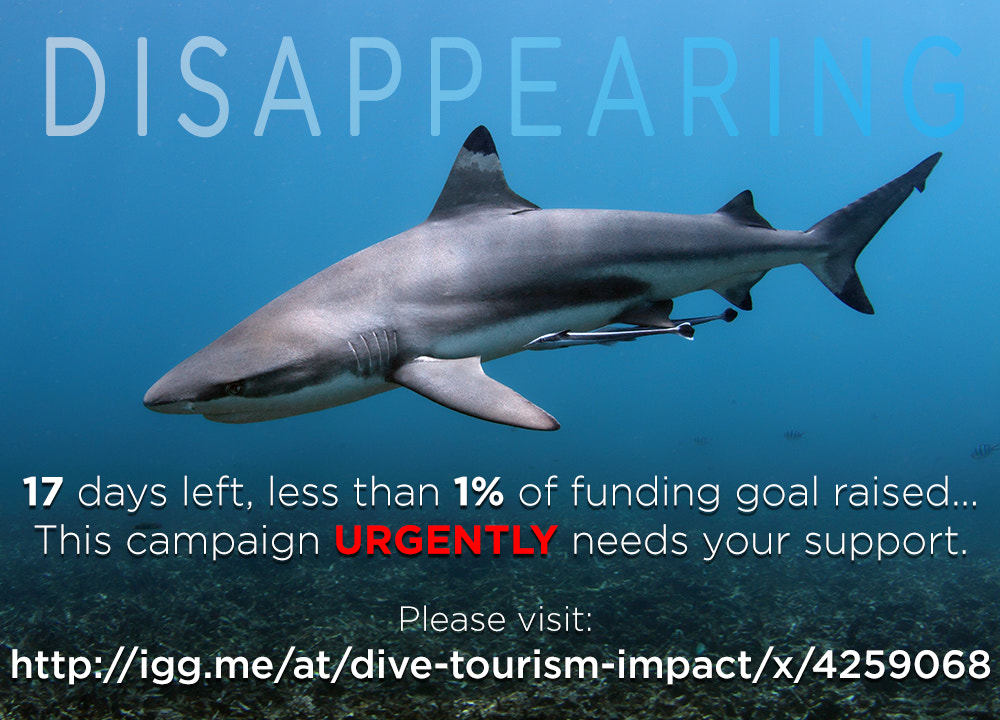 Photograph Impact Of Dive Tourism On Marine Ecosystems - Urgent appeal for support! by Jacques de Vos on 500px