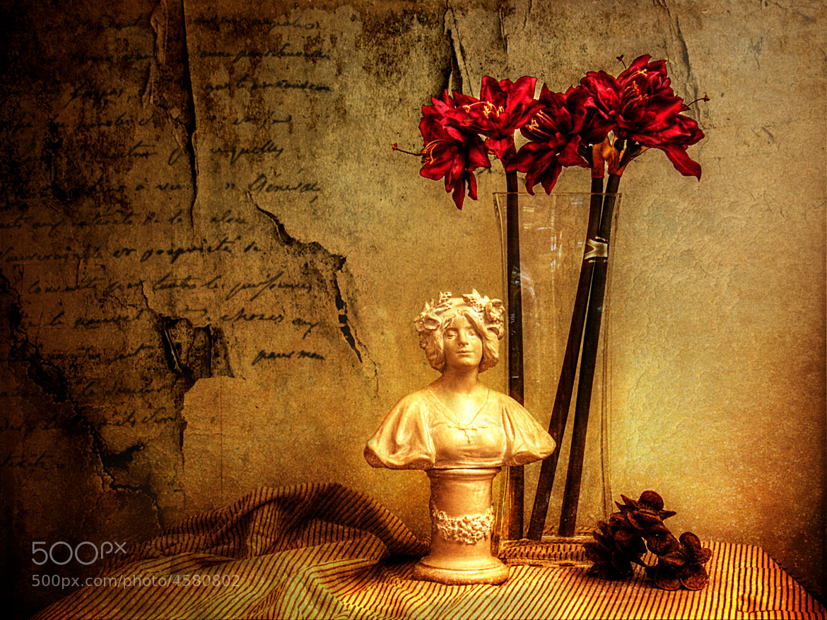 Photograph Still Life with Amaryllis by Link Bekka on 500px