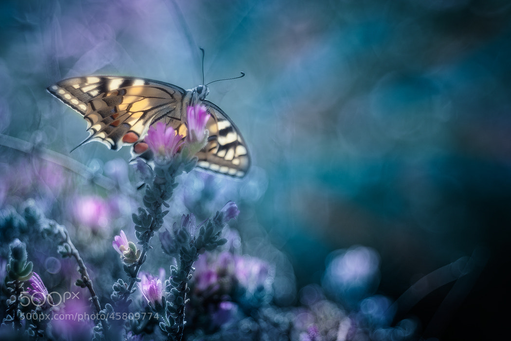 Photograph ✿ wings of freedom by Alberto Di Donato on 500px