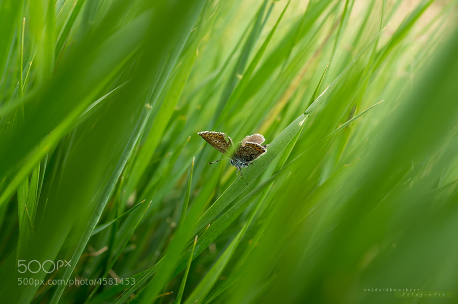 Photograph Try to hide by Norbert Vajdulák on 500px