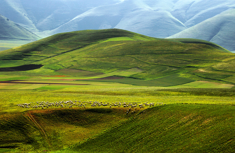 Photograph Flock in the mountains by Grazyna Anna Kondracka on 500px