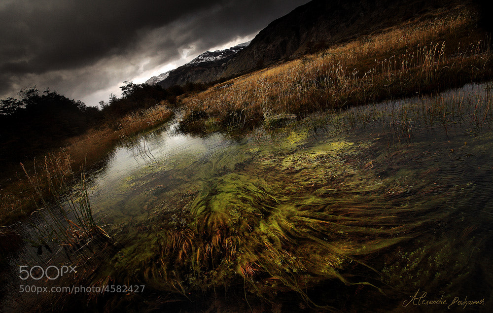 Photograph Dead Marshes  by Alexandre Deschaumes on 500px