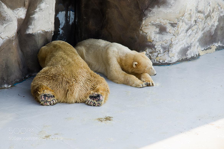 Photograph Sleeping bears by Sungjong Kim on 500px