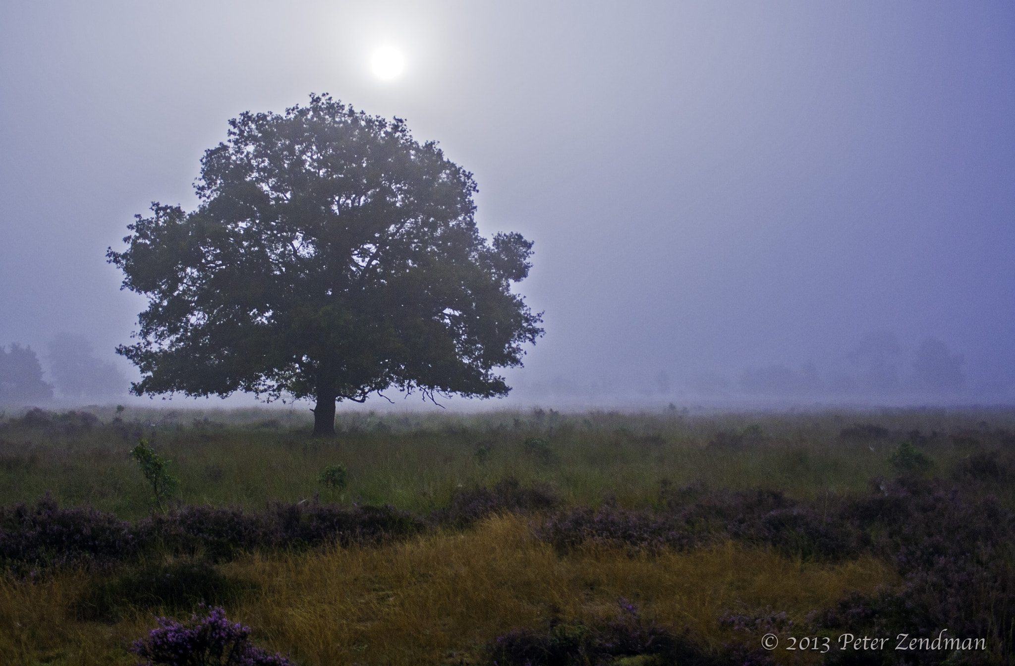 Photograph Oak in the fog by Peter Zendman on 500px
