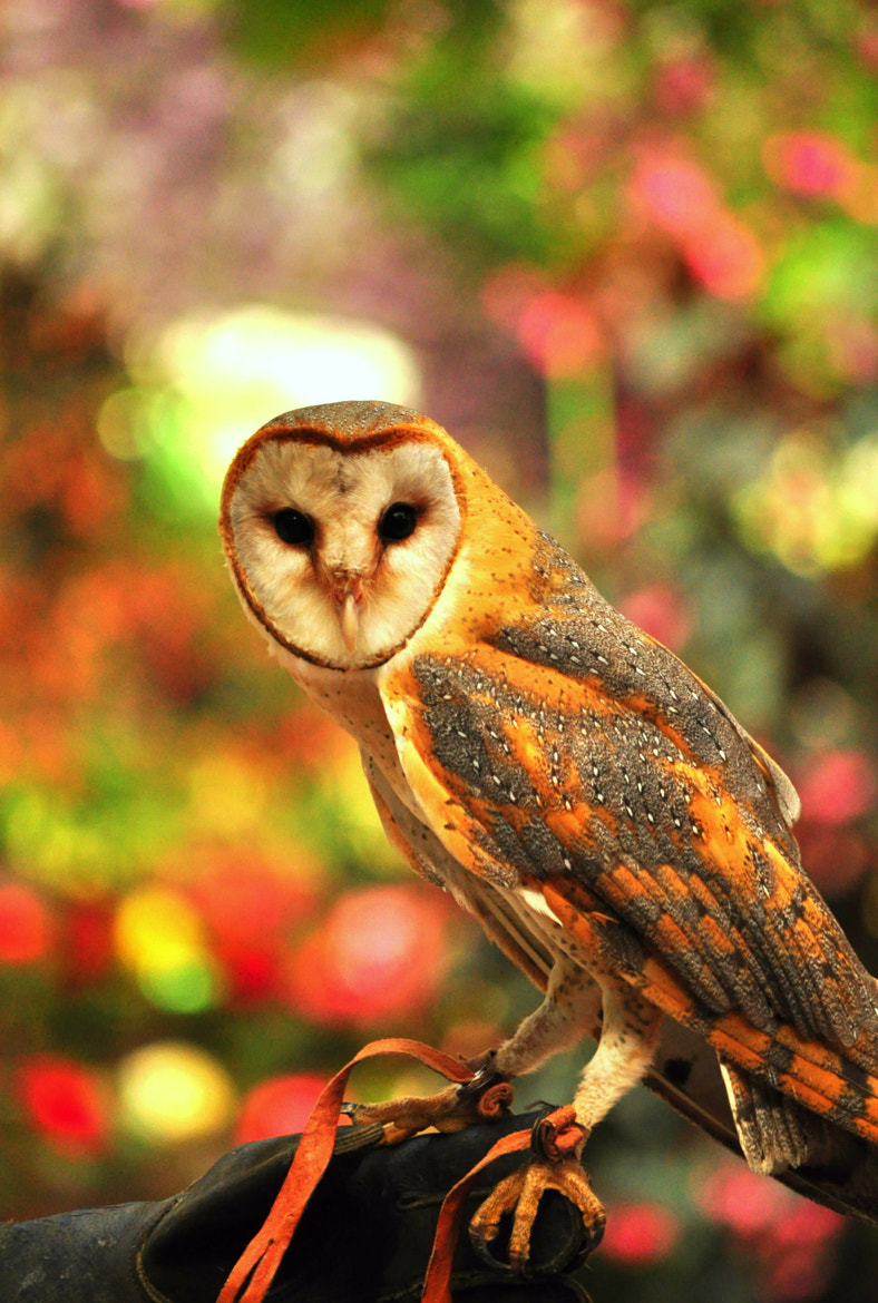 Photograph Harry porter is gonna love this owl by Saru Kachim on 500px