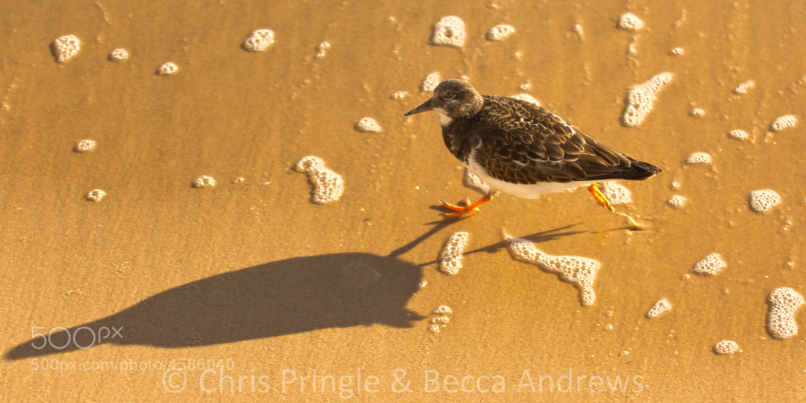 Photograph Chasing Shadows by Chris Pringle & Becca Andrews on 500px