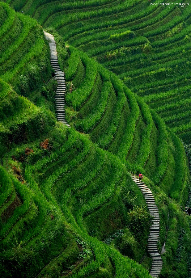Photograph STAIRWAY TO HEAVEN - LONGSHENG , GUILIN COUNTY- CHINA by noel casaje on 500px