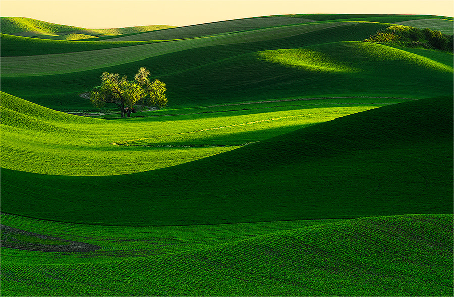 Photograph Catching the Light by Henrik Anker Bjerregaard  Lundh III on 500px