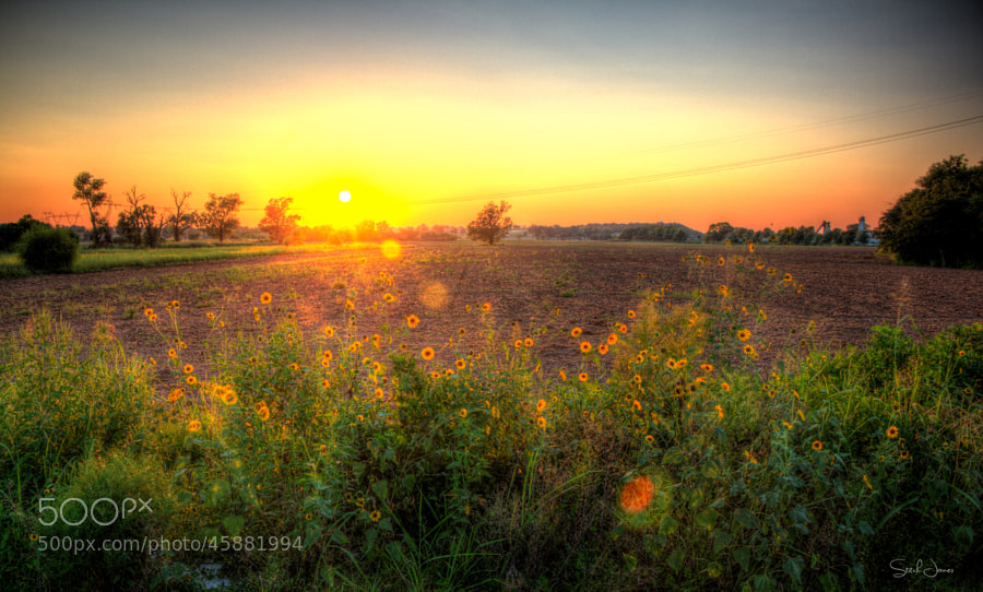 Photograph Sunset Field by Stitch Jones on 500px