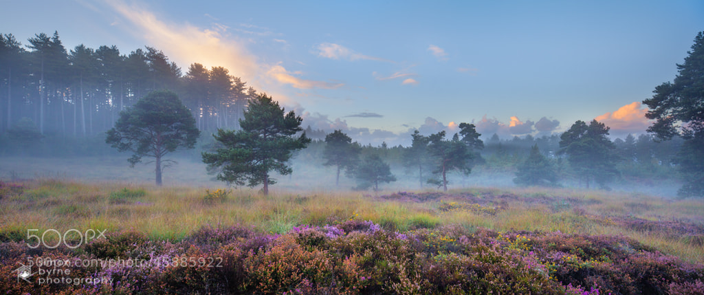 Photograph Wareham Woods, Dorset by Simon Byrne on 500px