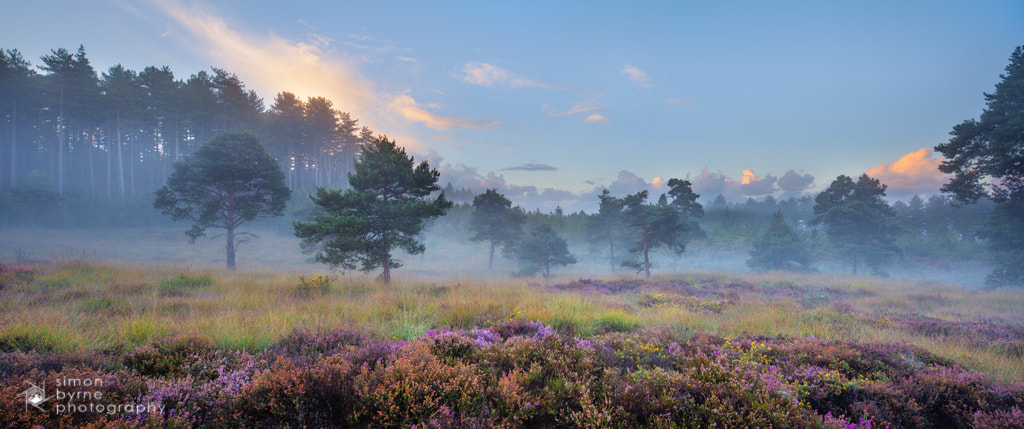 Photograph Wareham Woods, Dorset by Simon Byrne on 500px
