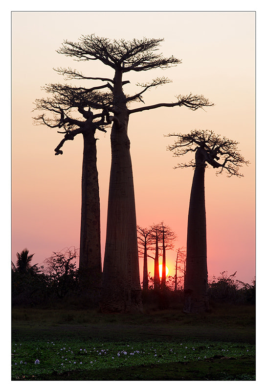 Photograph Baobab by Sylvain Sester on 500px