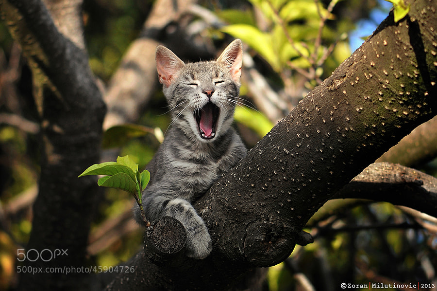 Photograph This is my tree! by Zoran Milutinovic on 500px