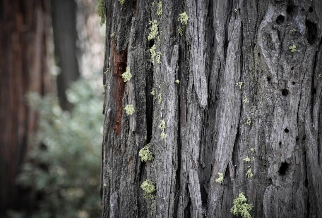 Photograph Bark and Moss by Tom Sanderson on 500px