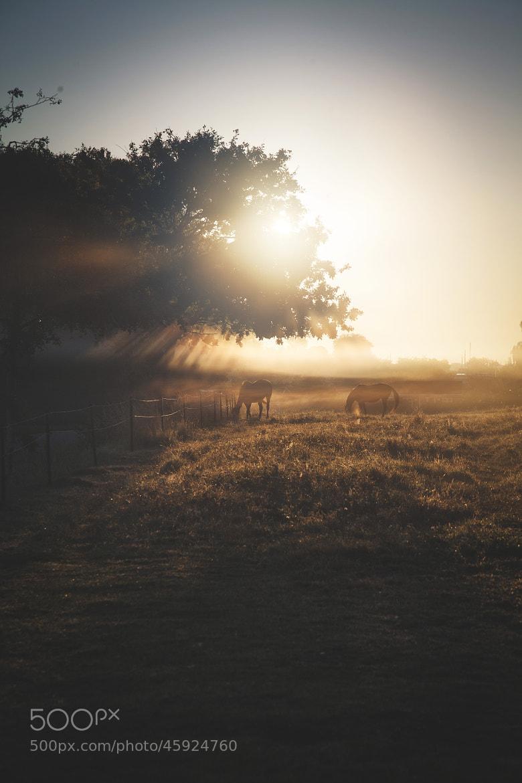 Photograph Forgin' Mornin' no.2 by Peter B. Christiansen on 500px