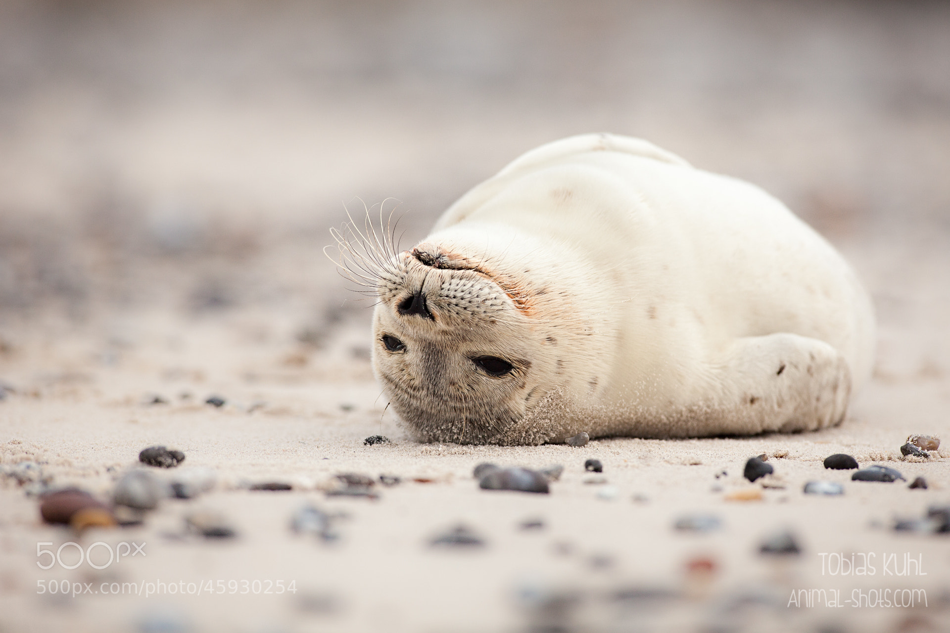 Photograph Relaxing Happily by Tobias Kuhl on 500px