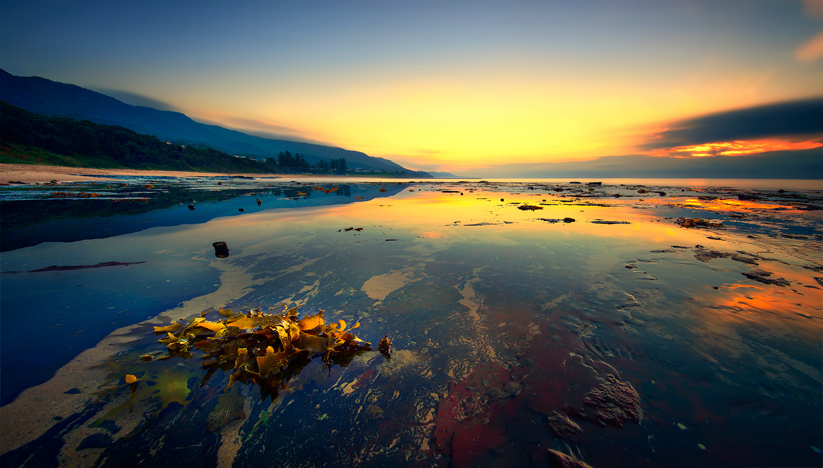 Photograph Golden seaweed by Goff Kitsawad on 500px