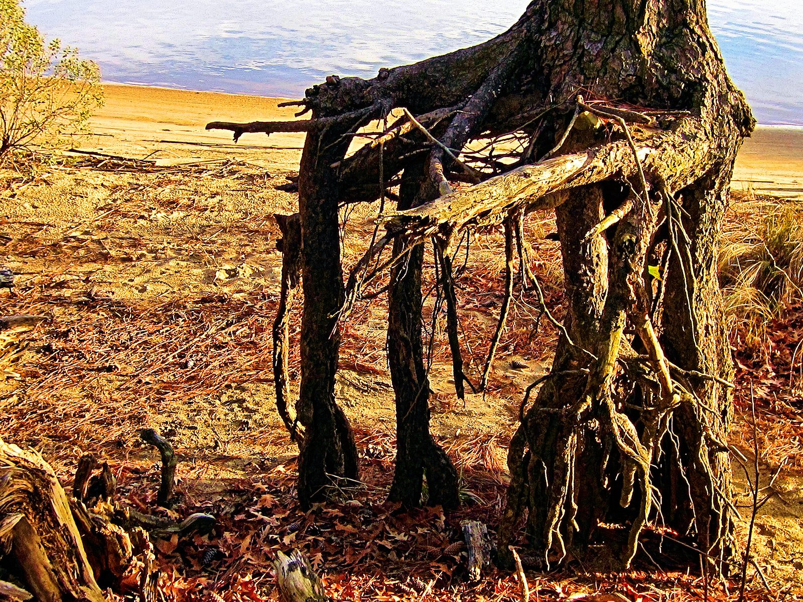 Photograph Rooted Erosion by SusanAnn Avery on 500px