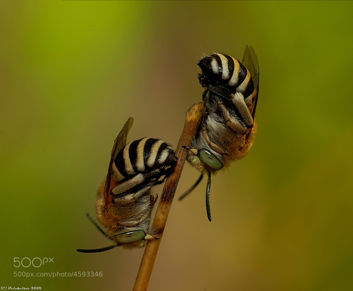 Photograph Abejas by Juan Carlos Rodriguez on 500px