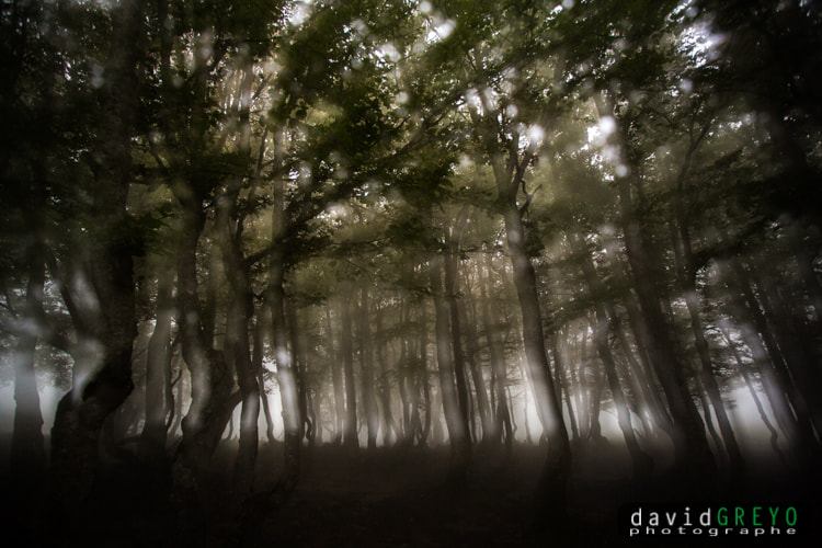 Photograph Forest of Mystery by David Greyo on 500px