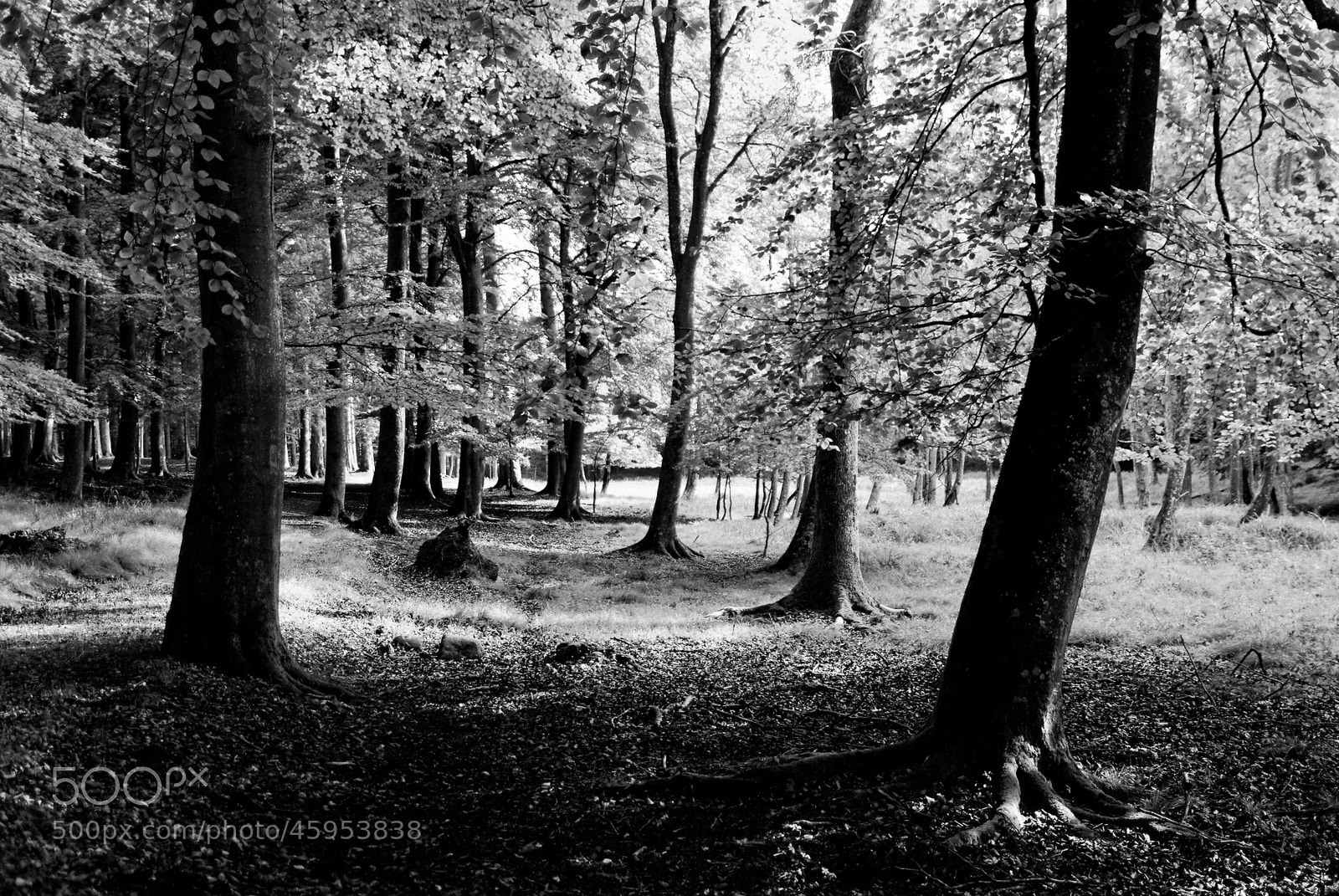 Photograph Black and white forest by Jørgen Jensen on 500px