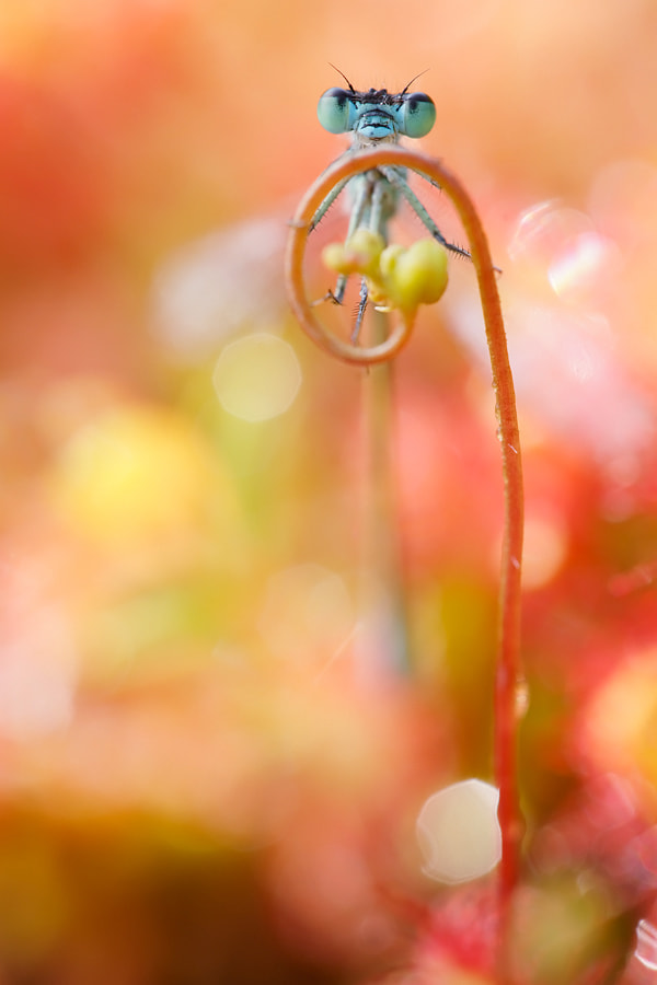 Photograph Damsel in Wonderland by Roeselien Raimond on 500px