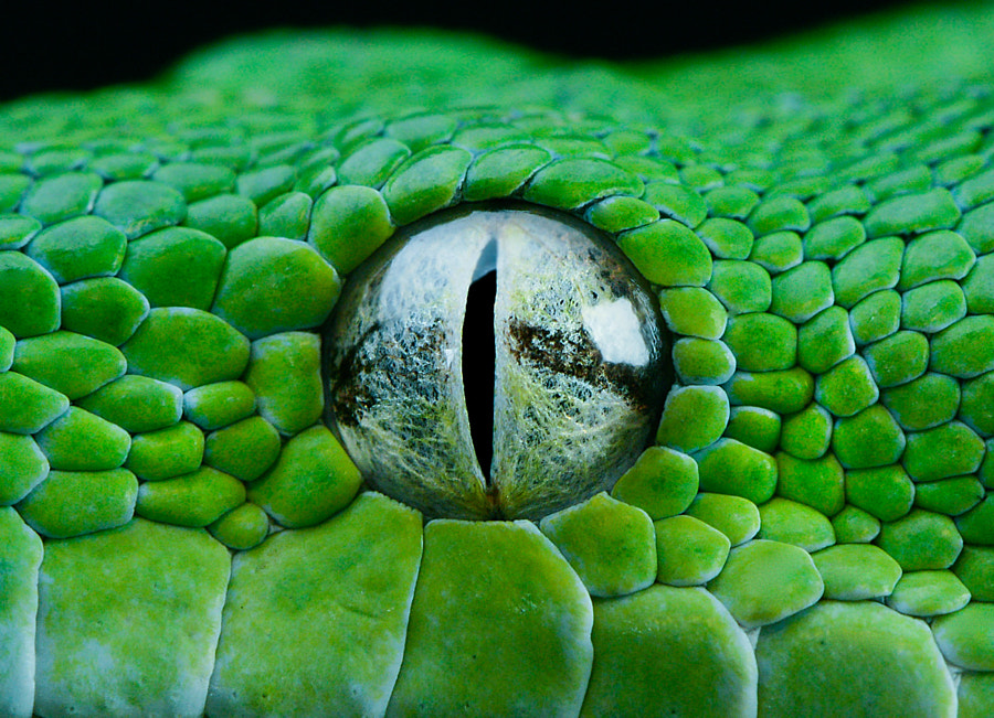 Photograph GTP EYE by Henrik Vind on 500px