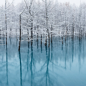 Blue Pond-Cool Colors