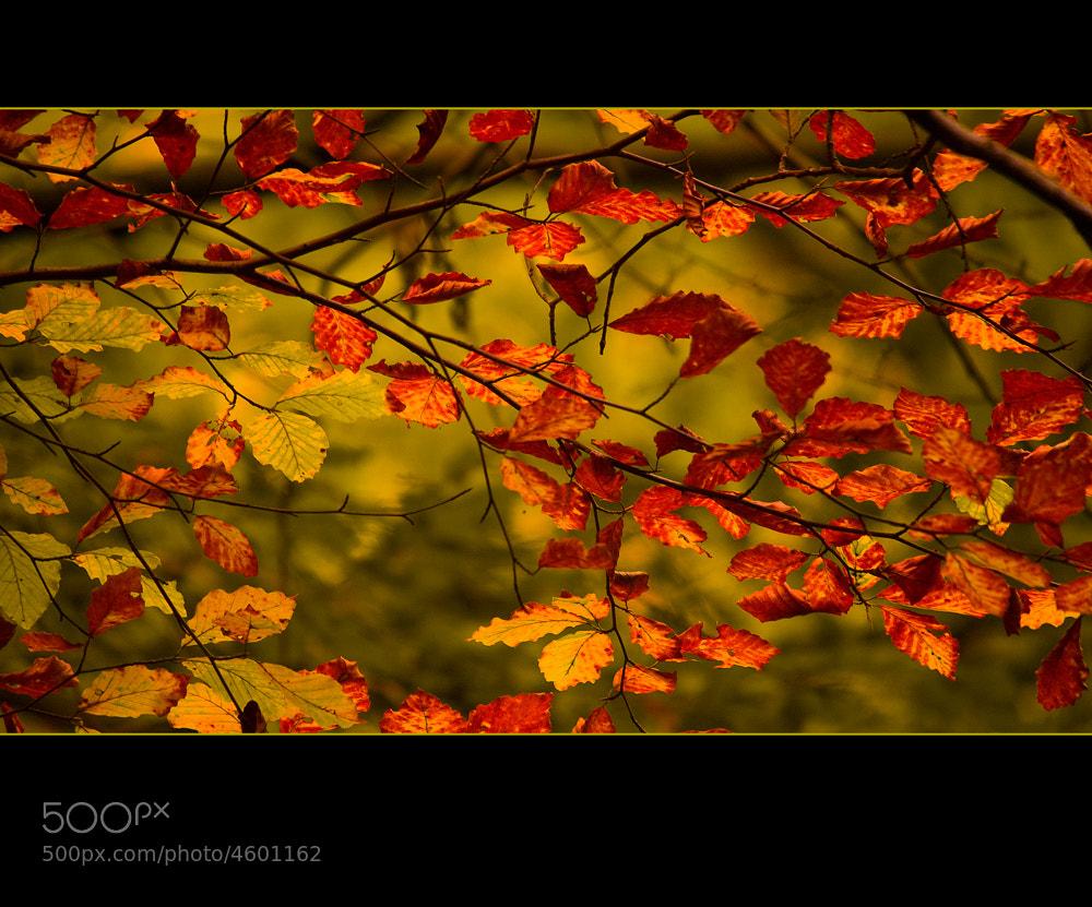 Photograph Leaf by István Ponty on 500px
