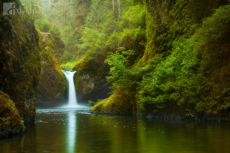 Photograph Pure by Dylan Fox on 500px