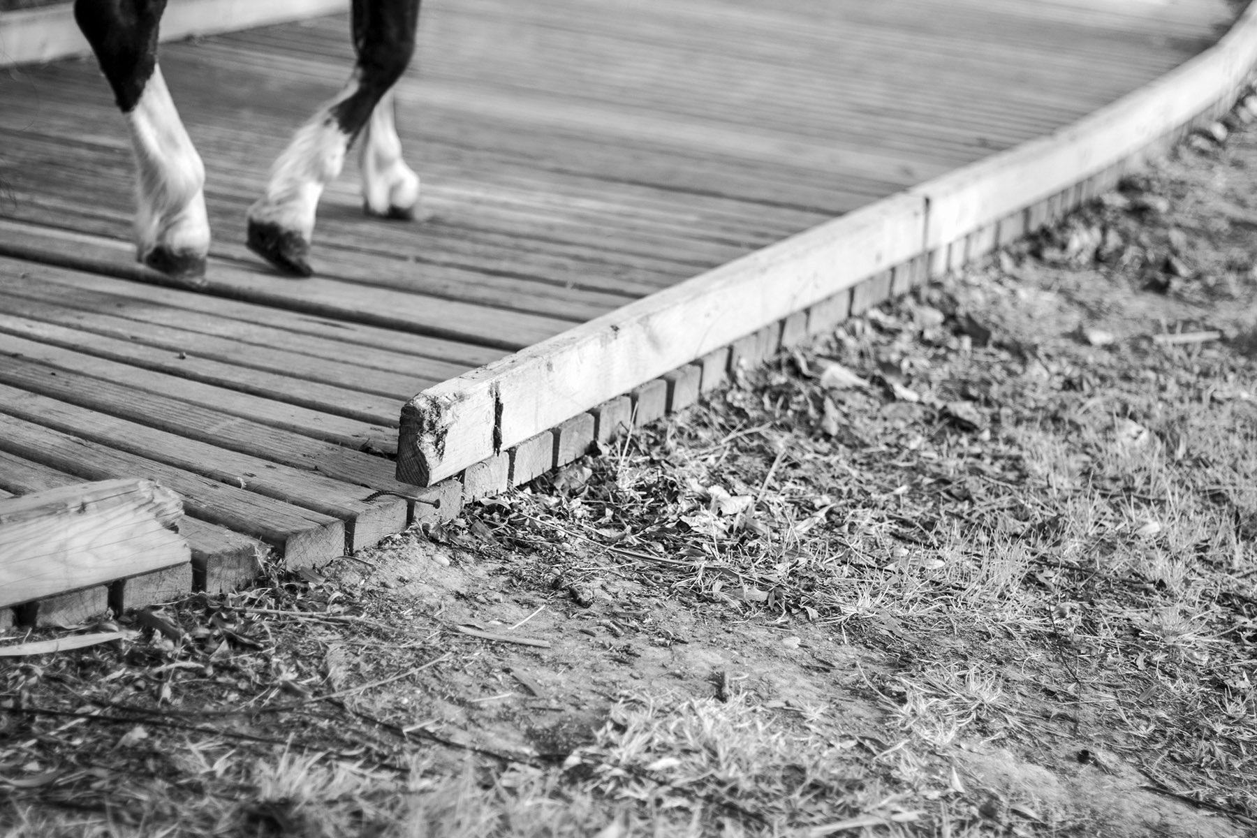 Photograph Walking by Rebeca Moncho on 500px