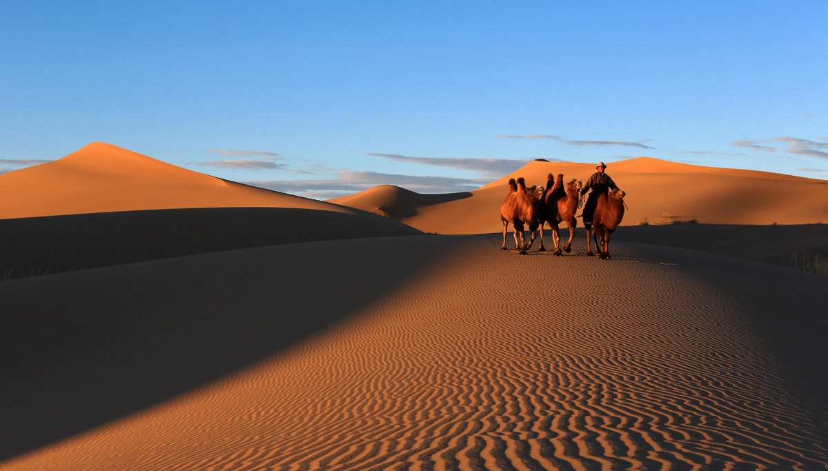 Photograph Gobi Desert, Mongolia by Batzaya Choijiljav on 500px
