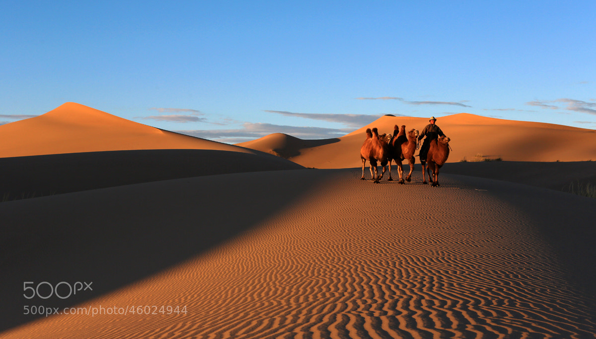 Photograph Gobi Desert, Mongolia by Batzaya Choijiljav on 500px