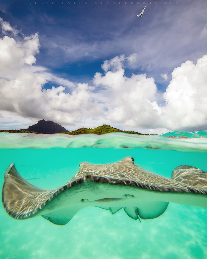 Photograph Stingray - Bora Bora by Jesse Estes on 500px