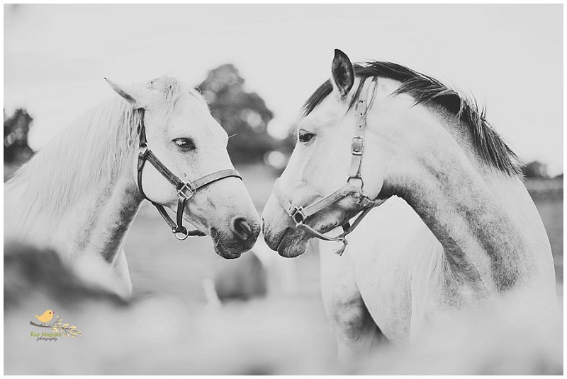 Photograph Love is in the air by Kay Maguire on 500px