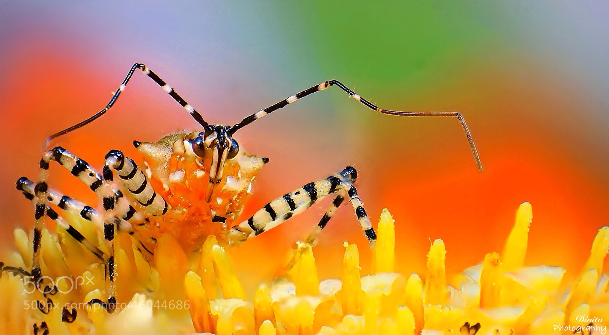Photograph Assassin Bug by Gustavo Restrepo on 500px
