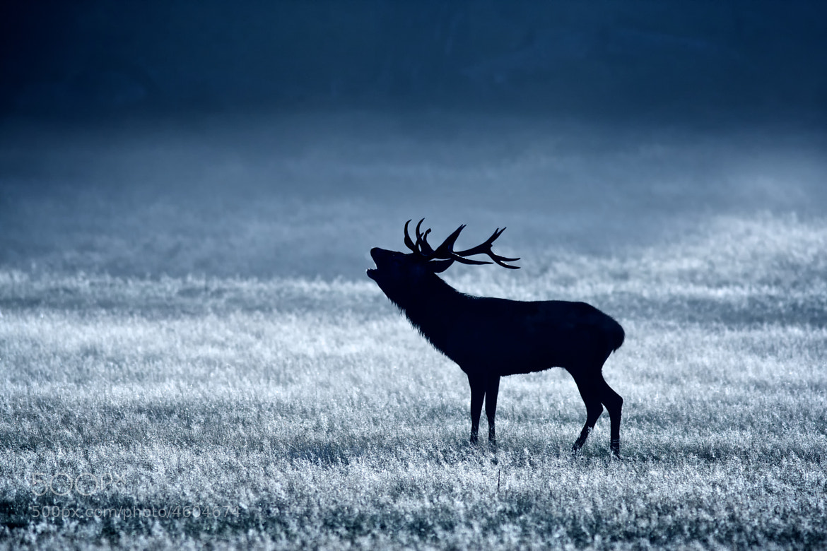 Photograph howl at the moon by Mark Bridger on 500px