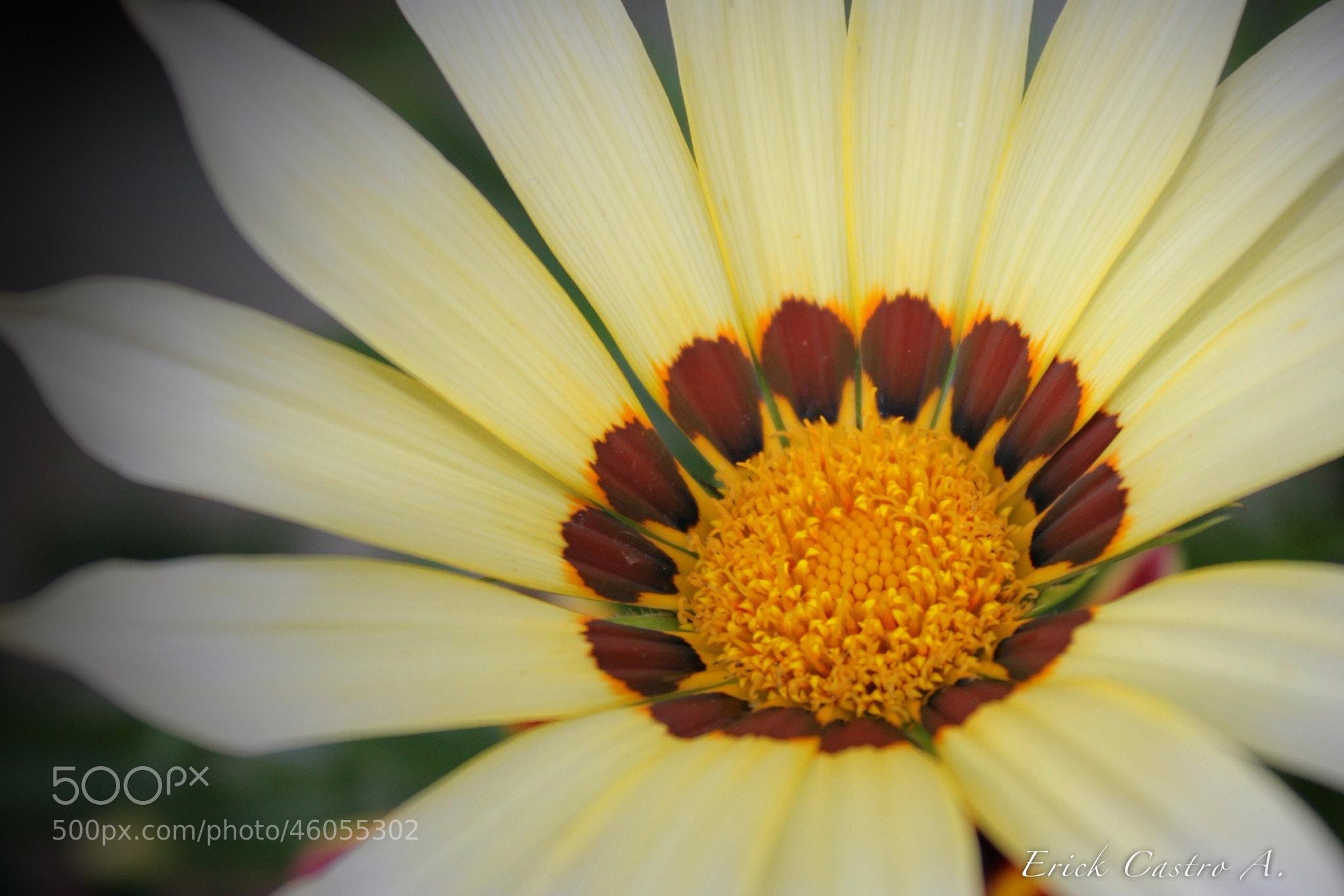 Photograph Flor by Erick Castro Alvarado on 500px
