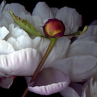 ...