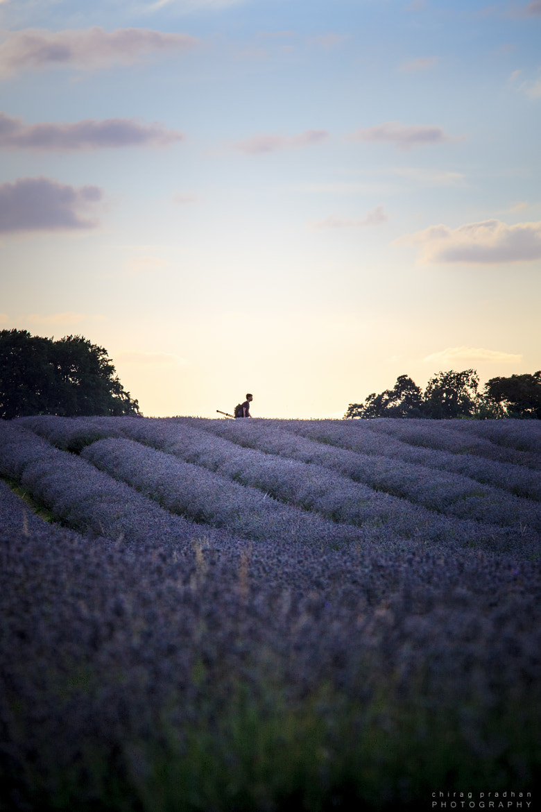 Photograph The Lavender Hunter by Chirag Pradhan on 500px