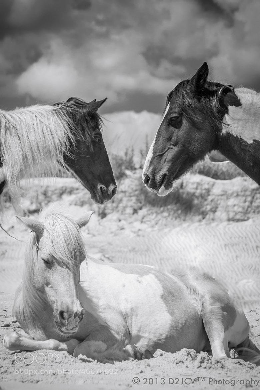 Photograph Wild Horse Throne by Daniel J. Cummuta on 500px