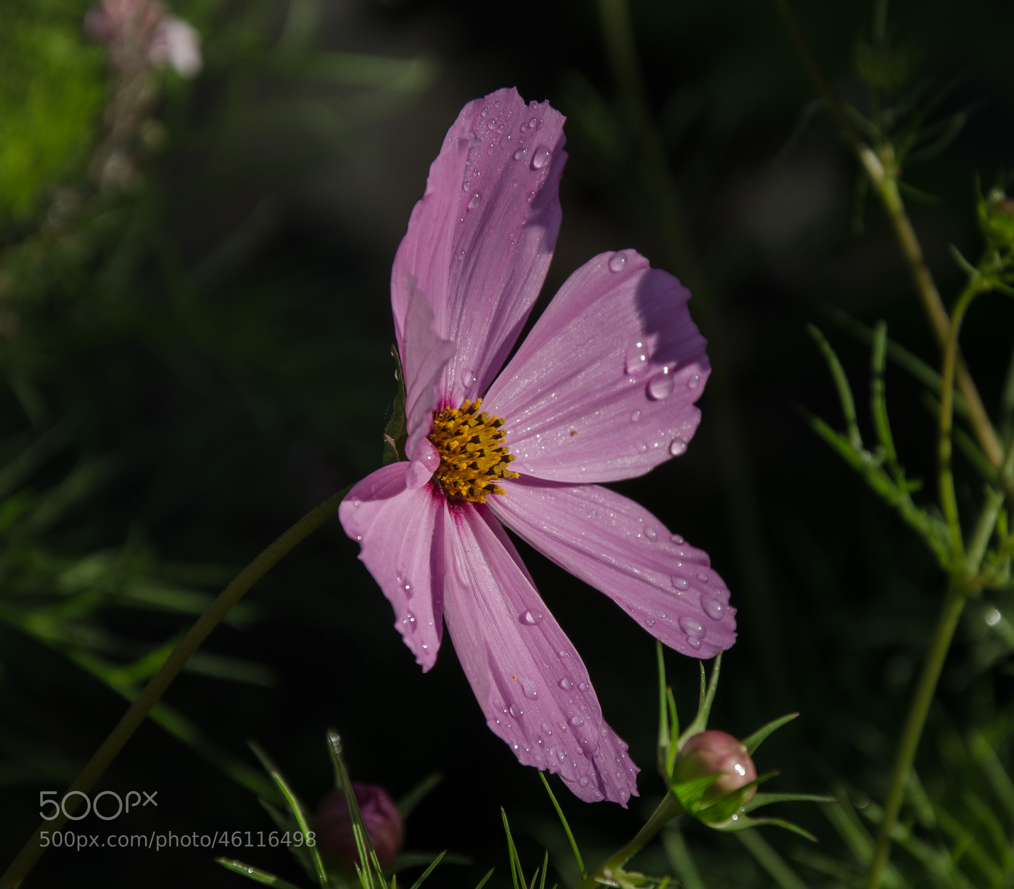 Photograph Cosmos 2 by Brian Sanders on 500px
