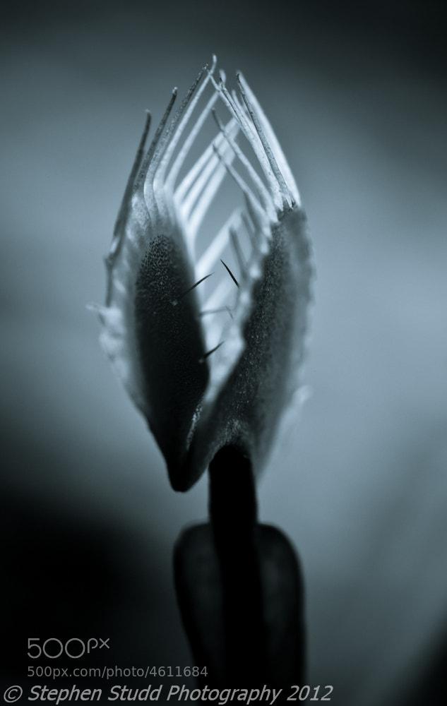 Photograph Dionaea Muscipula by Stephen Studd Photography on 500px