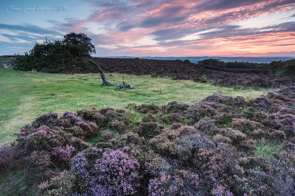 Photograph Stanton Moor and the Leaning Tree by James Grant on 500px