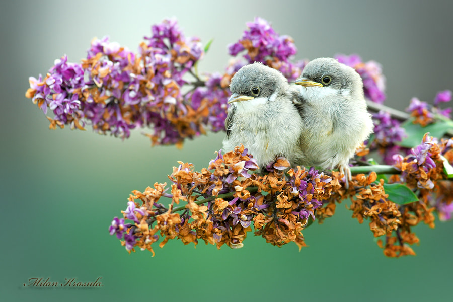 Photograph Little bugs by Milan Krasula on 500px