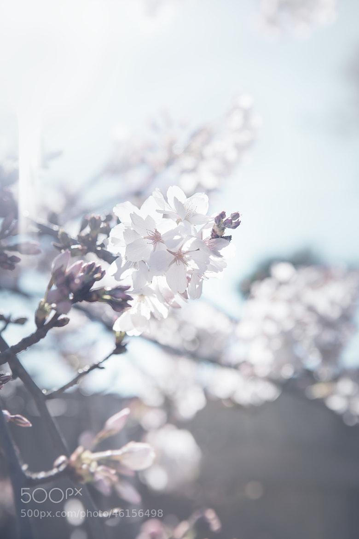 Photograph Hello Spring by Thai Hoa Pham on 500px