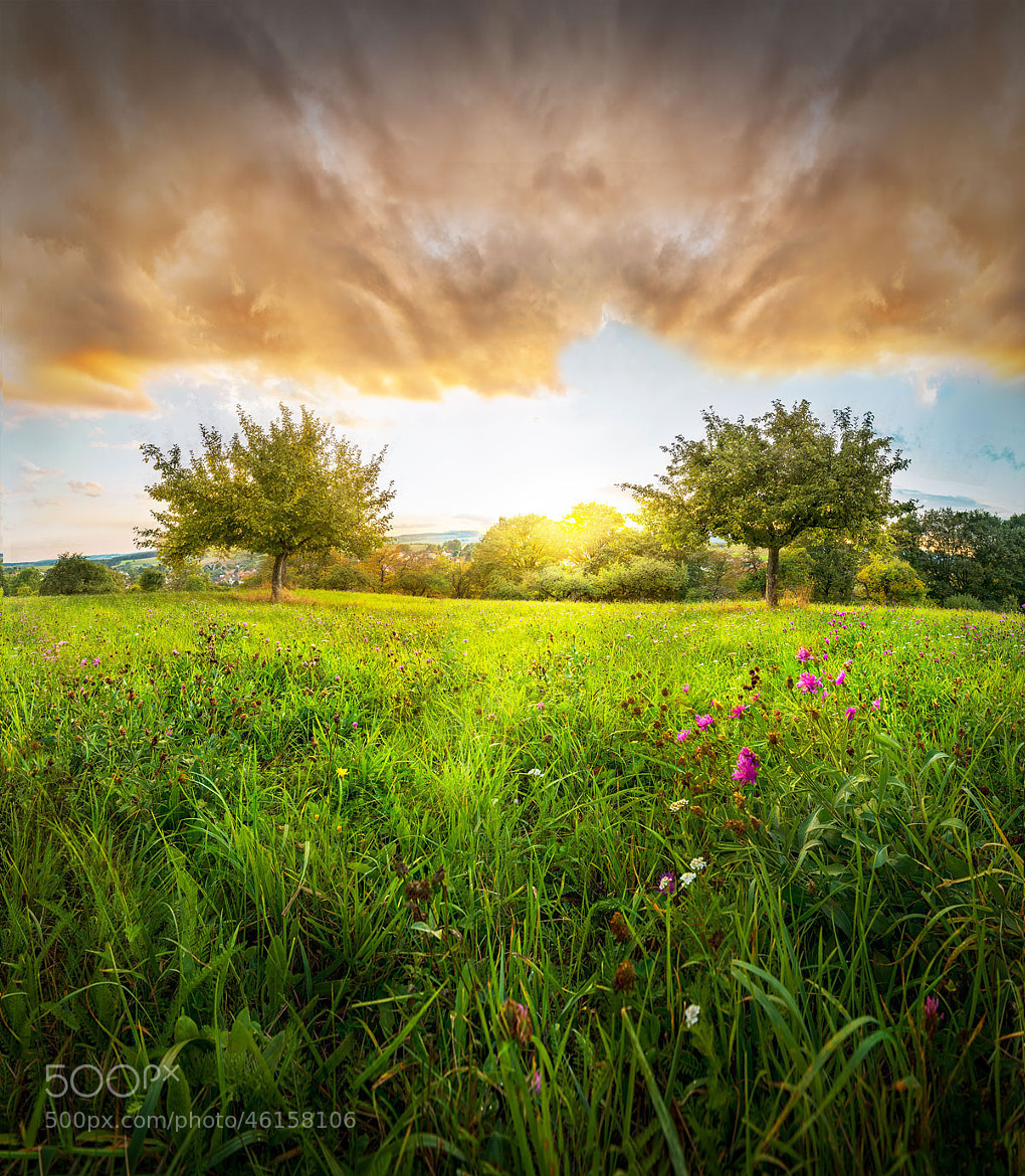 Photograph Summers End by Armin Barth on 500px